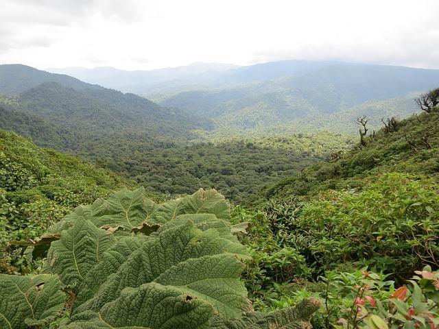 Заповедник Монтеверде в Коста-Рике