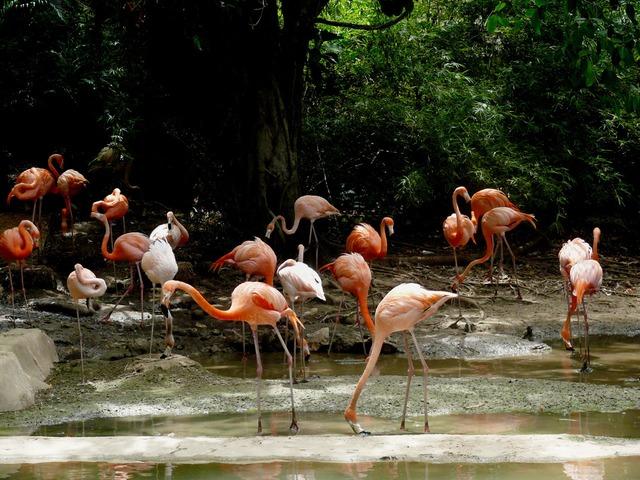 Фламинго в Доминикане