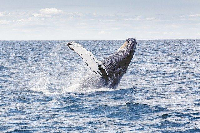 Экскурсии на китов в Доминикане