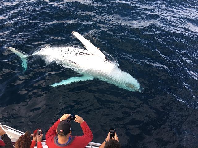Наблюдение за горбатыми китами в Доминикане